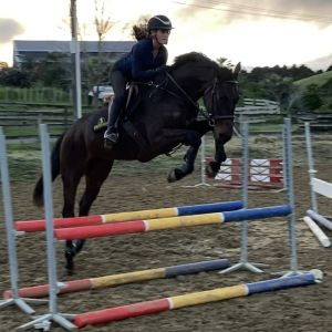 Horse for sale: Promising Centavos Mare
