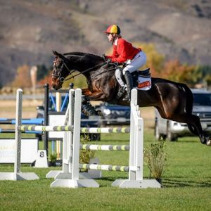 Horse for sale: Fun Talented Eventor