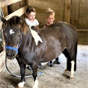 Horse for sale: WANTED GROOM - NANNY