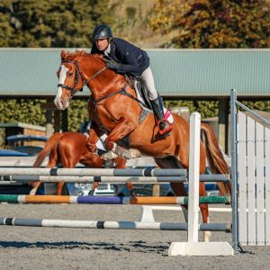 Horse for sale: Quality Show Jumping mare by Waitangi Amazon