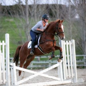 Horse for sale: Bred to Event!