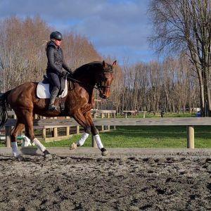 Stunning sport horse