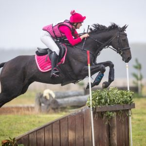 Horse for sale: Competitive 3* Eventer