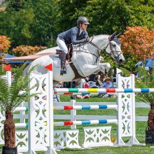 Horse for sale: Oaks Centurian
