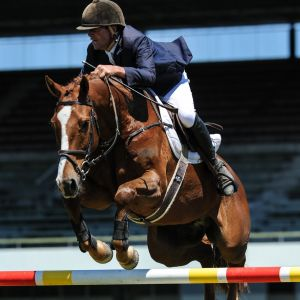 Horse for sale: Young Rider/Grand Prix