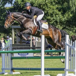 Horse for sale: Talented Young Show Jumper