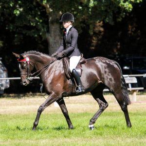 Horse for sale: Super safe kind stunning black mare