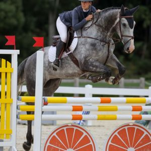 Horse for sale: QUALITY YOUNGSTER WITH A SERIOUS FUTURE