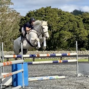 Horse for sale: 16.1hh 8yr Talented SJ Ngahiwi mare