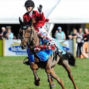 Horse for sale: WORLD CUP/GRAND PRIX  SHOWJUMPER
