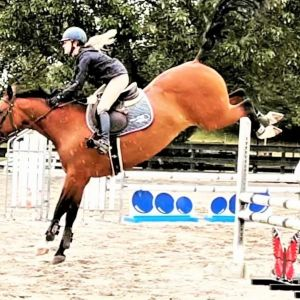 Horse for sale: STUNNING YOUNG MARE FULL OF SCOPE