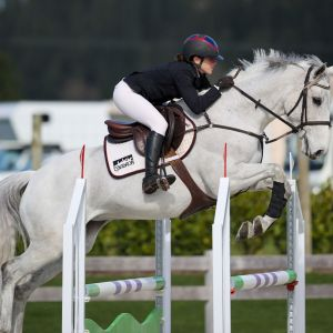Horse for sale: Kiwi Exodus