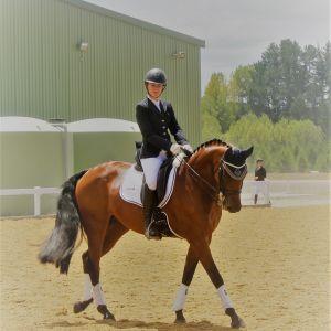 Horse for sale: AWB Imp. Dressage/Showing Warmblood Mare