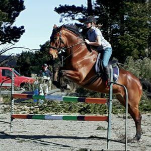 Horse for sale: Schoolmaster