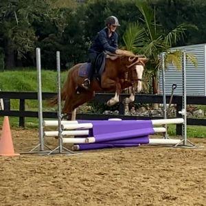 Horse for sale: Versatile 4yo mare