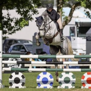 Horse for sale: Brave, Athletic And Powerful Horse!!