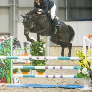 FUTURE JUMPING STAR WITH TOP PEDIGREE AND HUGE SCOPE