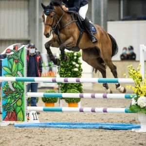 STUNNING 5YO WITH UNLIMITED POTENTIAL JUMPING OR EVENTING