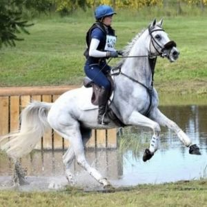 Horse for sale: Fun and competitive all-rounder