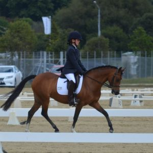TOP PERFORMANCE & BEGINNER RIDER'S DREAM LEAD REIN, FIRST RIDDEN, DRESSAGE & PC PONY