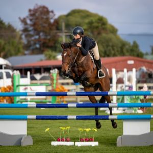 Horse for sale: COMPETITIVE & HIGHLY TALENTED ENGLISH RIDING PONY