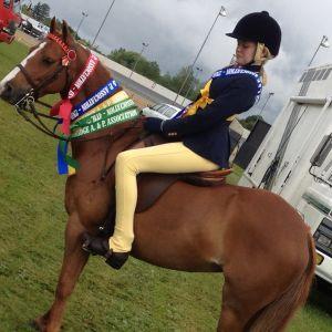Apsley Hot Gossip English Riding Pony