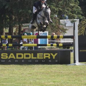 Talented  show jumper. All rounder   GP