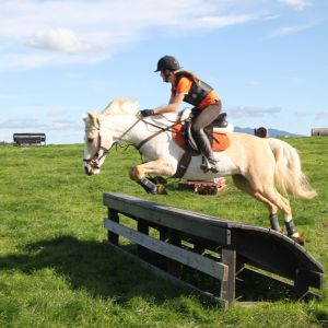 Horse for sale: Stunning all-round pony