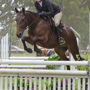 Superstar Pony