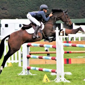 Ultimate showjumping/eventing pony