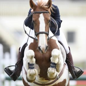 Horse for sale: The Ultimate Schoolmaster- Full Height Pony