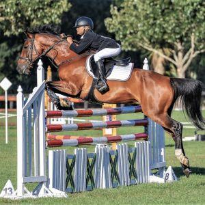 Rare Opportunity - All-round Mini Prix Pony - 2020 South Island Champion