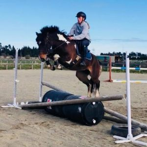 Horse for sale: All rounder with HUGE potential
