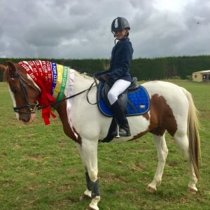 The Ultimate Schoolmaster Pony