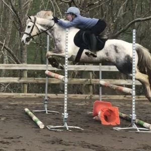 Horse for sale: Lovely Project Pony