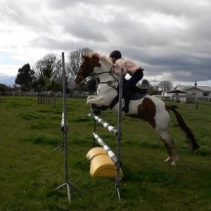 Horse for sale: Genuine All Rounder with Huge Potential