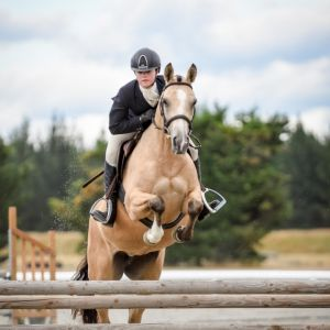 Full Height Pony Mare now located in Christchurch