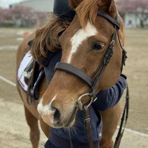 Gorgeous Kind Pony