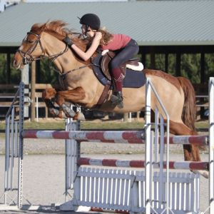 Fabulous full-height jumping pony