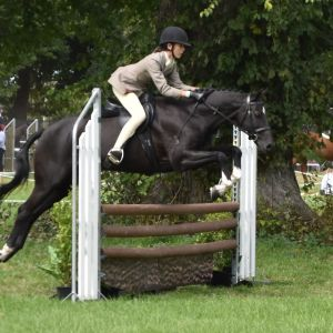 Dream Show Hunter and All Round Pony
