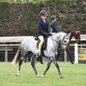 Horse for sale: Eastdale Mini Cooper