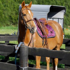 Full size pony