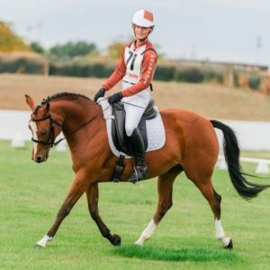 Horse for sale: EXCEPTIONAL PERFORMANCE PONY