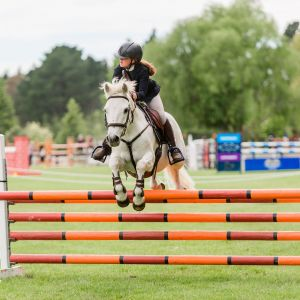 Horse for sale: Wembleybrook O'Driscoll