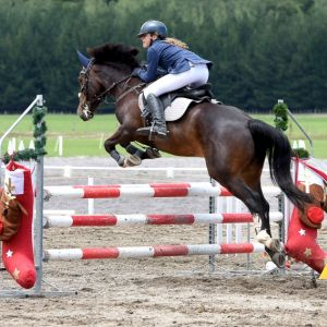 Horse for sale: Genuine capable allround full size pony