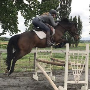 Horse for sale: Perfect Little Rebel ,by Windward Rebel