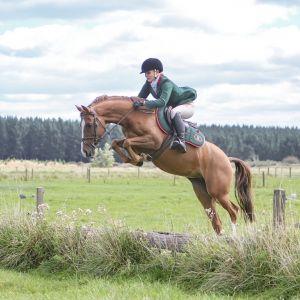 Flashy Davidoff Riding Pony