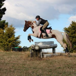 Horse for sale: Super Star SJ Mare or Broodmare