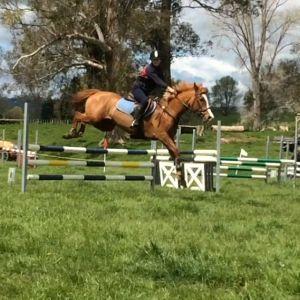 scopey full size pony