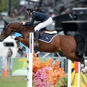 Horse for sale: Proven Talented Show Jumper